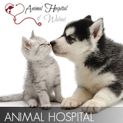 Animal Hospital Video  Production